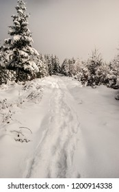 winter snow covered hiking trail with trees around near Polomka hill in Moravskoslezske Beskydy mountains on czech - slovakian borders
