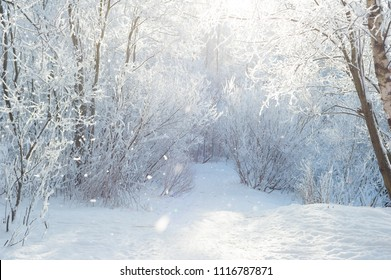 Winter snow at field with snowy trees alley