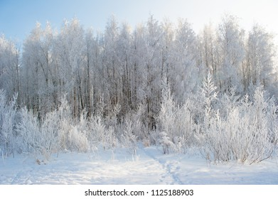 Winter snow at field with snowy trees