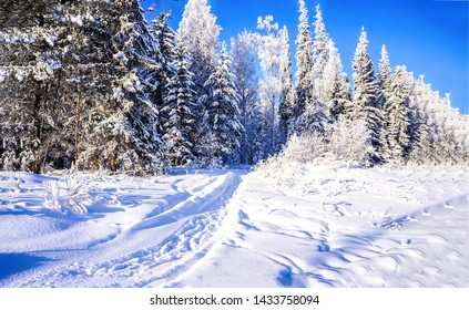Winter snow forest path landscape. Snow forest path in winter scene. Winter snow forrest path. Winter snow forest pathway landscape