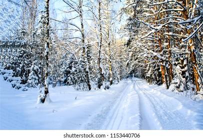 Winter snow forest road landscape. WInter road in snow forest view. Snow road in winter forest scene