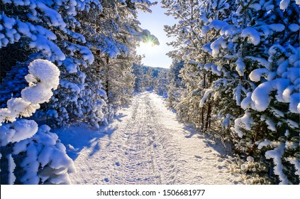 Winter snow forest road scene. Winter forest road view. Snow forest road view. Winter snow forest road landscape