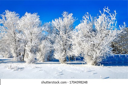 Winter snow forest scene view