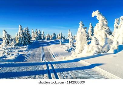 Winter snow forest ski trail landscape. Ski trail in winter snow forest scene. Winter snow forest ski trail panorama