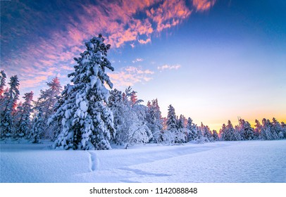 Winter snow forest sunset landscape. Sunset winter snow forest in Christmas wonderland scene. Winter sunset snow forest panoramic landscape