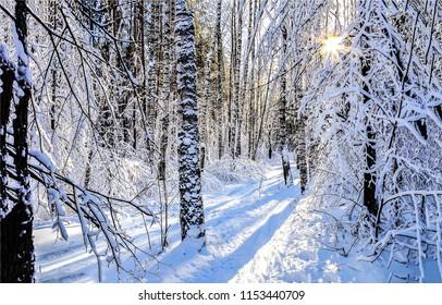 Winter snow forest sunset scene. Sunset winter snow forest view. Winter snow sunset forest trail