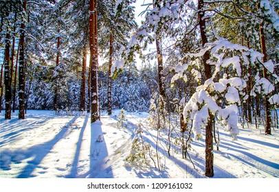 Winter snow forest sunset scene. Sunset winter snow pine tree forest background. Winter snow sunset pine forest view. Sunset winter snow pine forest landscape