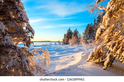 Winter snow forest sunset view. Sunset forrest winter snow scene. Winter snow sunset forest scene. Sunset winter snow forrest view