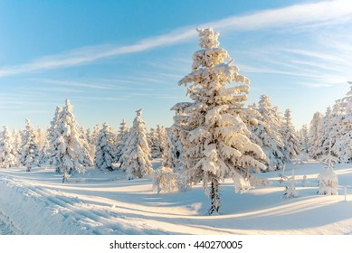 Winter snow forest tree sun mountain view