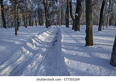 Winter snow garden in Sofia park, Bulgaria