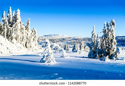 Winter snow mountain forest trees landscape. Christmas wonderland winter snow nature panorama. WInter snow mountain forest view