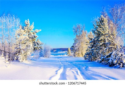 Winter snow nature landscape. Winter snow wonderland scene. Snow covered trees on winter snow background. Winter country view