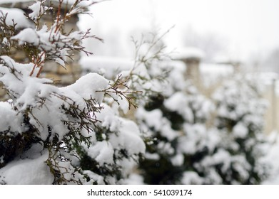 winter, snow on the branches of a tree, patterns.