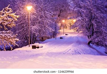 Winter snow park alley night lights landscape. Snow benches at winter night park alley panorama. Winter snow  night lights in winter city park view