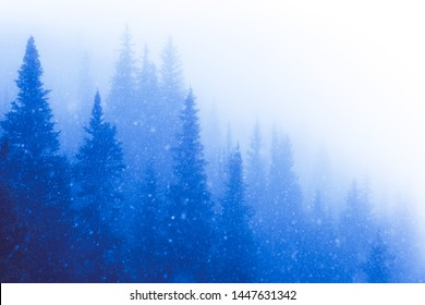 Winter snow storm in a Rocky Mountain forest landscape