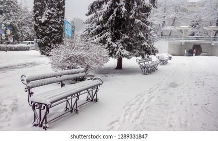 Winter. Snow. Three benches stand along the footpath. Everything is covered in white snow. Christmas trees with snow caps. Shrubs without foliage are covered with frost. Frost, overcast, snowing.
