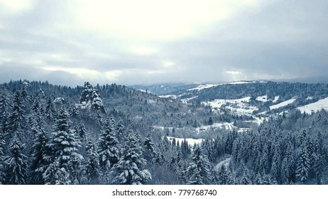 Winter snow trees. aerial view fly over. tustan