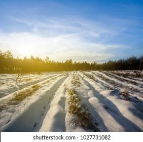 winter snowbound forest glade at the sunset