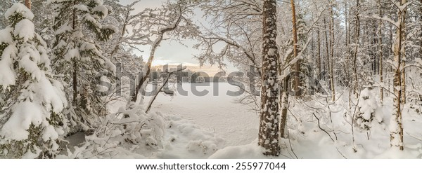 Winter, snow-covered forest on a sunny day. Winter landscape. panorama