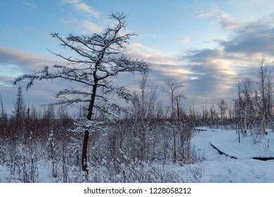 Winter snow-covered trees and blue cloudy sky, Norilsk, October 23, 2018