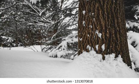 A winter snowfall
