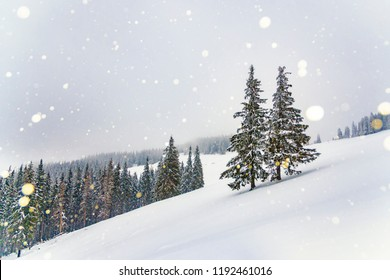 Winter snowfall high in the mountains. Snowy hills with spruce trees covered by deep snow