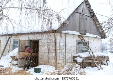 Winter is snowing. A male farmer carries dry reeds in a barn. Rural landscape.
