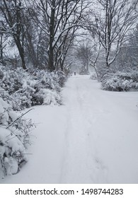 Winter, snowy alley, trees and shrubs