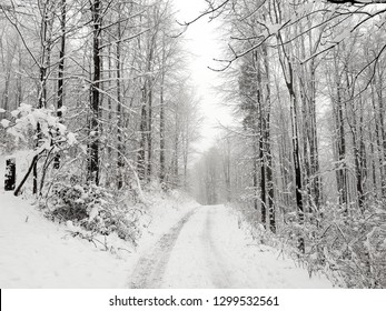 Winter snowy empty road in a forest.