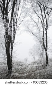 Winter snowy forest in the dense fog.