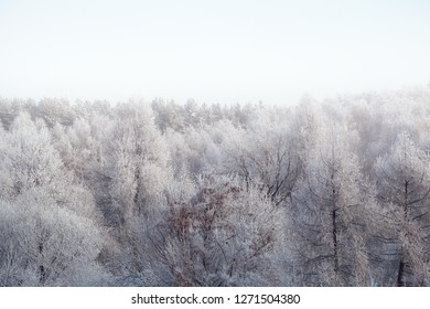 Winter snowy forest in the fog