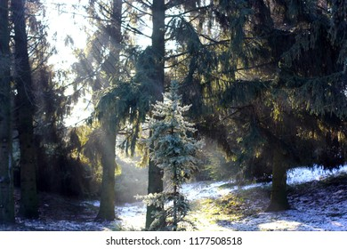 Winter snowy forest landscape with sun rays