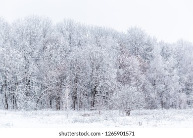 Winter snowy forest wall deadpan style white background