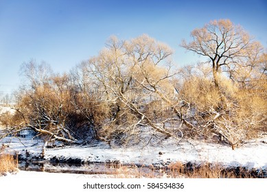 Winter snowy landscape with trees. Outdoor