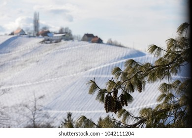 winter in southern styria, an old wine producing country