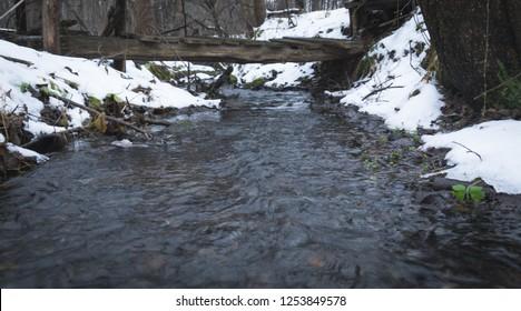 winter or spring forest stream landscape close up