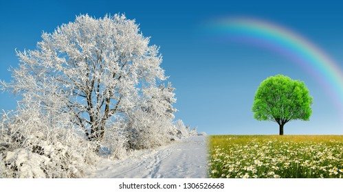 Winter and spring landscape with blue sky. Frozen tree and daisy flowers on meadow. Concept of change season.