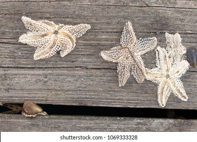 Winter starfish skeletons
