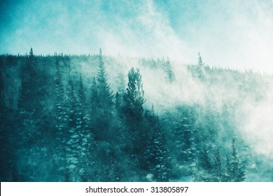 The Winter Storm. Extreme Winter Storm Conditions with High Wind and Blowing Snow in the Forest. Winter Scenery