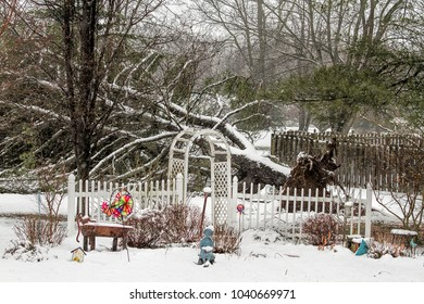Winter Storm uproots large pine tree.