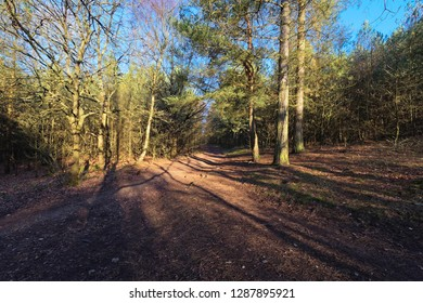 The winter sun casts long shadows where woodland paths cross on a bright clear morning