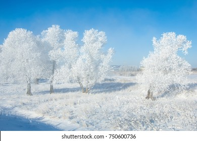 The winter sun frost. cold. a deposit of small white ice crystals formed on the ground or other surfaces when the temperature falls below freezing.
