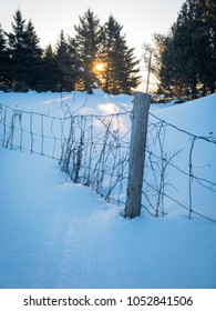 Winter sun peaking through trees and old fence