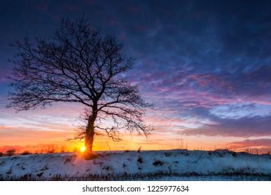 The winter sun setting behind a snow covered oak tree, Jutland, Denmark.