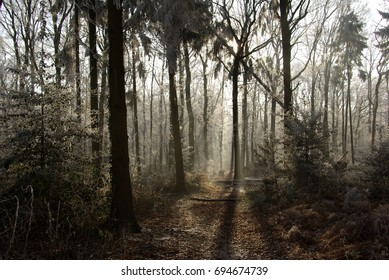 Winter sunlight in Dutch forest (Hummelo, The Netherlands)