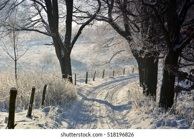 Winter sunny landscape
