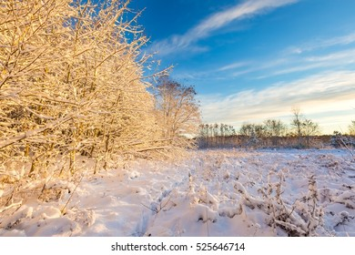 Winter sunrise landscape with fresh snow. Snow covered countryside with trees.