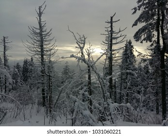Winter sunrise  landscape tree snow