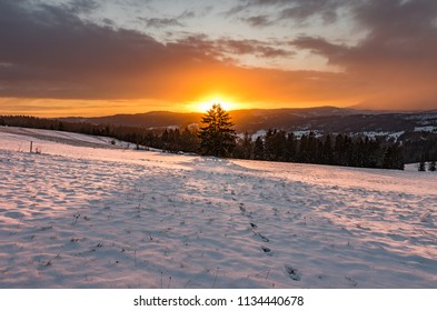 Winter sunrise with lonely tree, Little Poland landscape