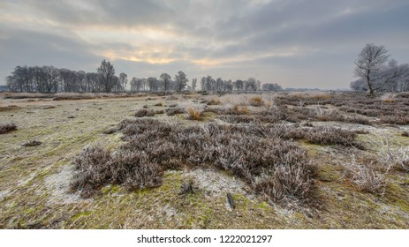 Winter sunrise over frosty heathland with hoarfrost in balloerveld nature reserve